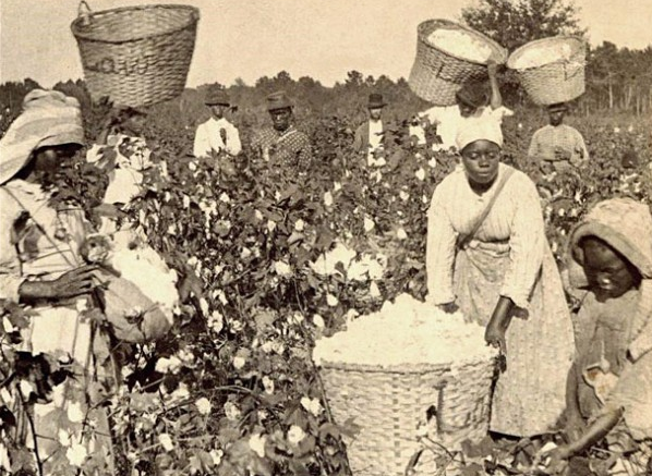 Enslaved-Blacks-picking-cotton